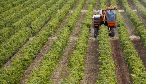 Picture 0 for Αγρότες : Σχετικά με την μη εμφάνιση παραγωγών ως επαγγελματίες αγρότες στο σύστημα του Υπουργείου Οικονομικών