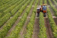 Ποιοι αγρότες υπάγονται στο ειδικό καθεστώς ΦΠΑ και ποιοι στο κανονικό