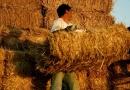 Πριμ 50.000 ευρώ σε νέους αγρότες και κτηνοτρόφους για επιστροφή στην ύπαιθρο